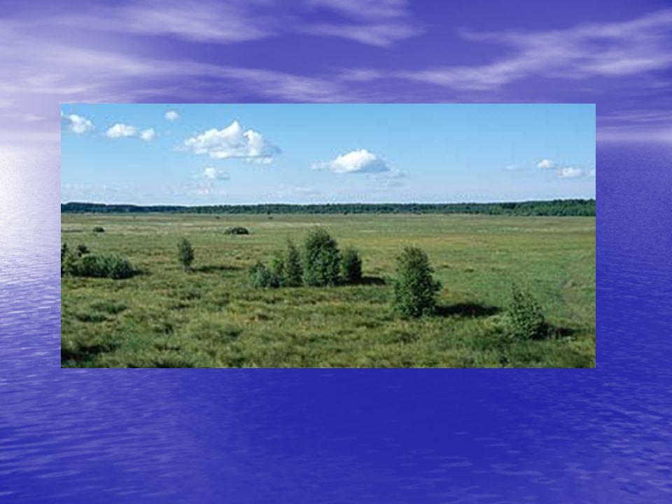 Narwiański Park Narodowy Narwiański Park Narodowy bez wahania można nazwać perełką na skalę europejską.