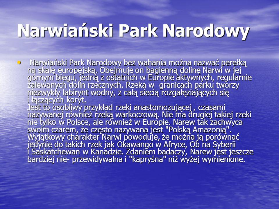 Narwiański Park Narodowy Narwiański Park Narodowy bez wahania można nazwać perełką na skalę europejską. Obejmuje on bagienną dolinę Narwi w jej górnym