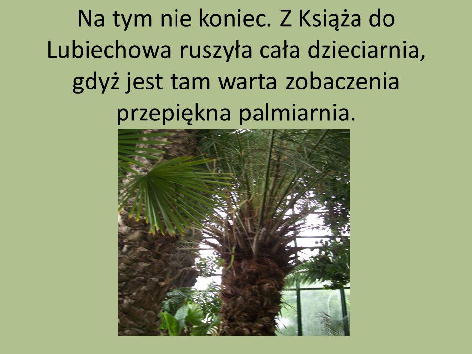 Na tym nie koniec. Z Książa do Lubiechowa ruszyła cała dzieciarnia, gdyż jest tam warta zobaczenia przepiękna palmiarnia.