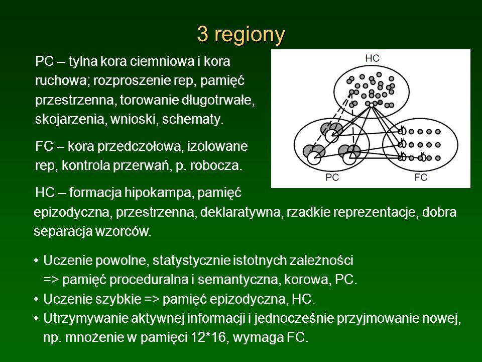 3 regiony PC – tylna kora ciemniowa i kora ruchowa; rozproszenie rep, pamięć przestrzenna, torowanie długotrwałe, skojarzenia, wnioski, schematy. FC –
