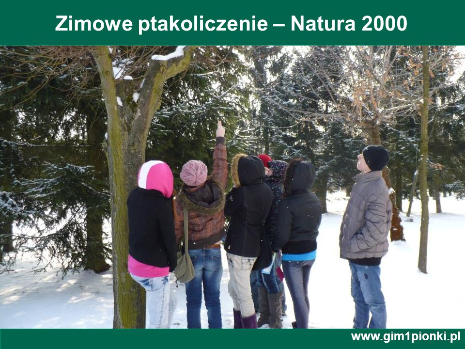 Publiczne Gimnazjum z Oddziałami Integracyjnymi nr 1 im. Jana Kochanowskiego w Pionkach Zimowe ptakoliczenie – Natura 2000 www.gim1pionki.pl