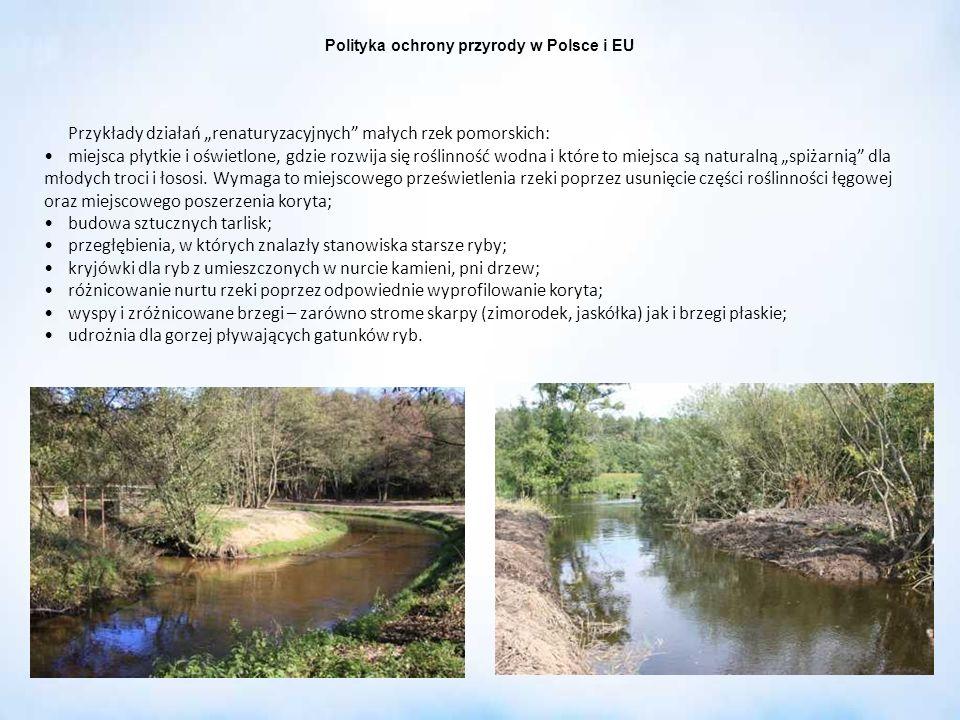 Przykłady działań renaturyzacyjnych małych rzek pomorskich: miejsca płytkie i oświetlone, gdzie rozwija się roślinność wodna i które to miejsca są nat