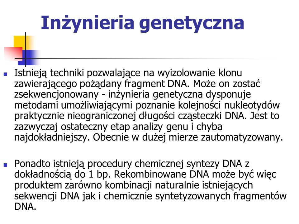 Inżynieria genetyczna Istnieją techniki pozwalające na wyizolowanie klonu zawierającego pożądany fragment DNA. Może on zostać zsekwencjonowany - inżyn