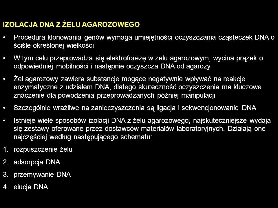 IZOLACJA DNA Z ŻELU AGAROZOWEGO Procedura klonowania genów wymaga umiejętności oczyszczania cząsteczek DNA o ściśle określonej wielkości W tym celu pr