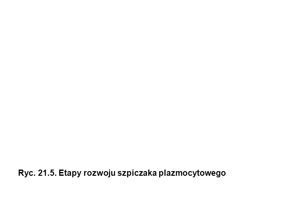 albuminy glopbuliny α1 glopbuliny α2 glopbuliny β glopbuliny γ Ryc.