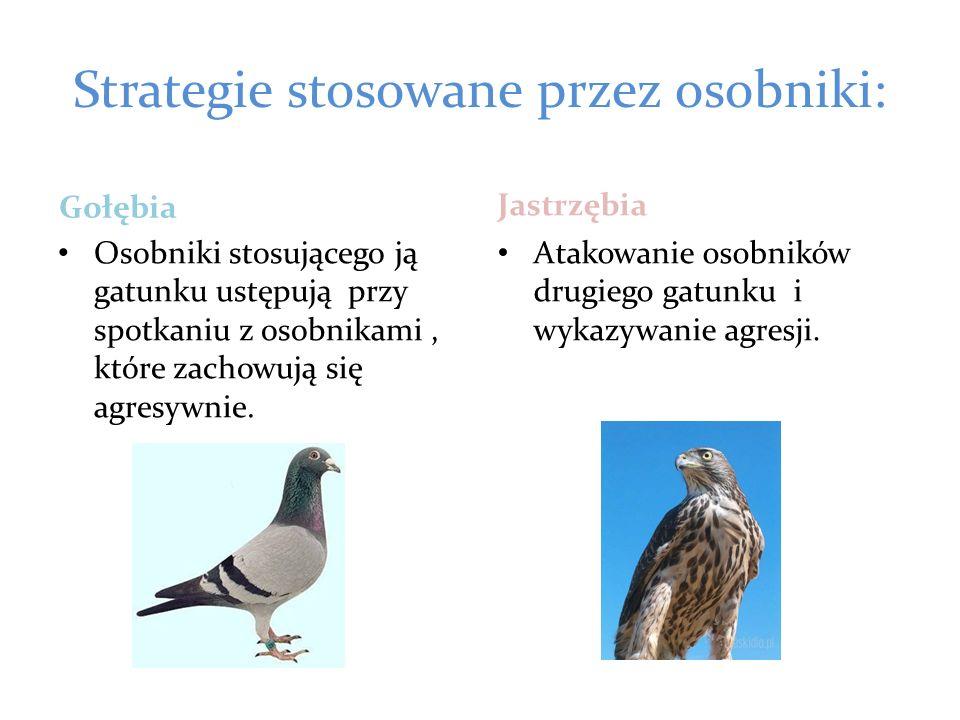Strategie stosowane przez osobniki: Gołębia Osobniki stosującego ją gatunku ustępują przy spotkaniu z osobnikami, które zachowują się agresywnie. Jast