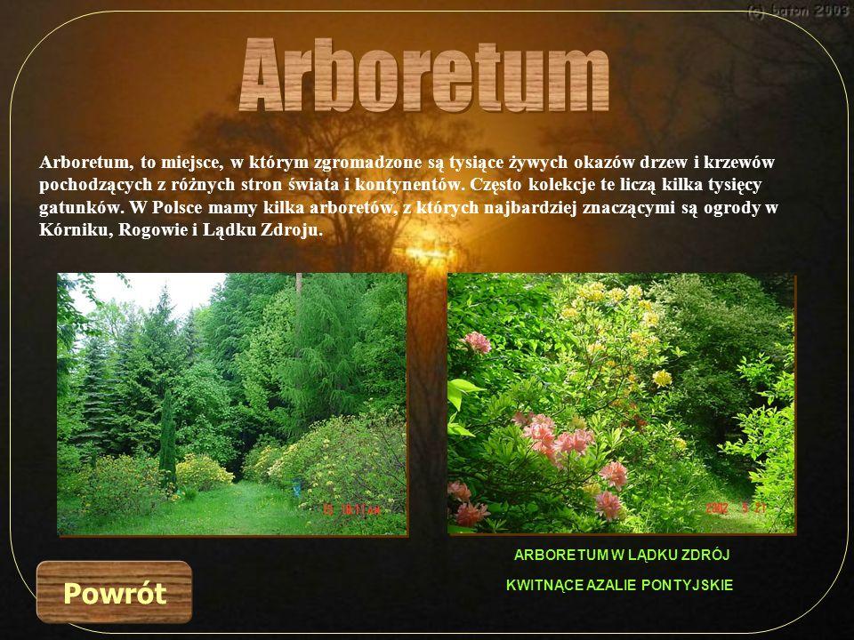 Arboretum, to miejsce, w którym zgromadzone są tysiące żywych okazów drzew i krzewów pochodzących z różnych stron świata i kontynentów. Często kolekcj