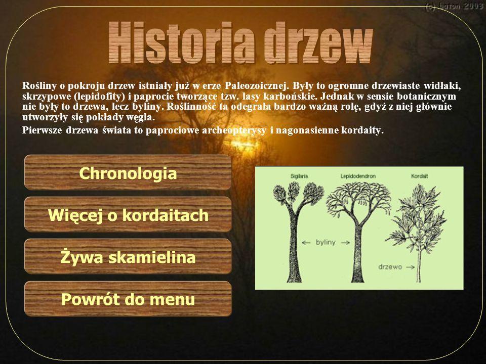 Rośliny o pokroju drzew istniały już w erze Paleozoicznej. Były to ogromne drzewiaste widłaki, skrzypowe (lepidofity) i paprocie tworzące tzw. lasy ka