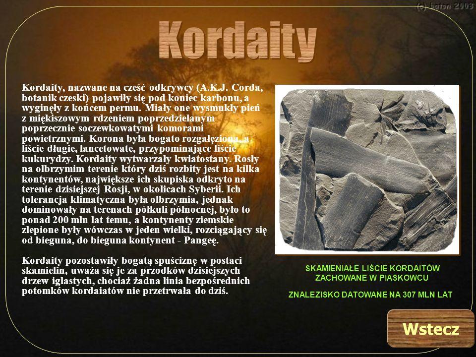 Kordaity, nazwane na cześć odkrywcy (A.K.J. Corda, botanik czeski) pojawiły się pod koniec karbonu, a wyginęły z końcem permu. Miały one wysmukły pień