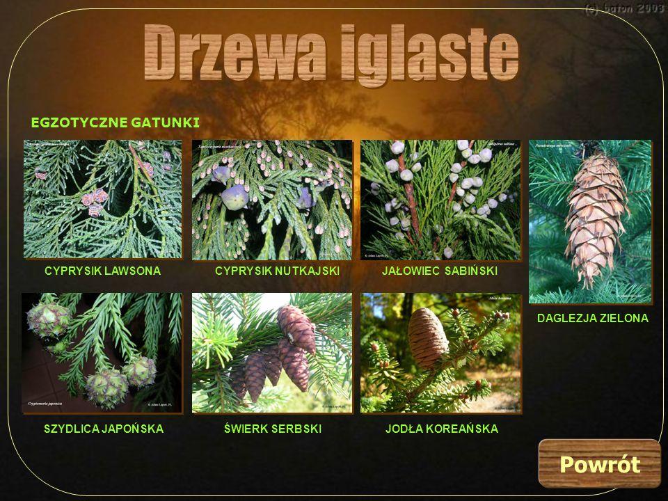 Drzewa liściaste należą do roślin okrytozalążkowych.