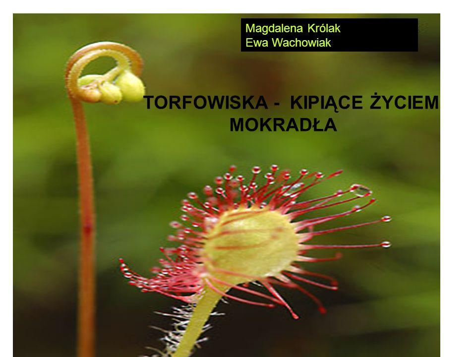 TORFOWISKA - KIPIĄCE ŻYCIEM MOKRADŁA Magdalena Królak Ewa Wachowiak