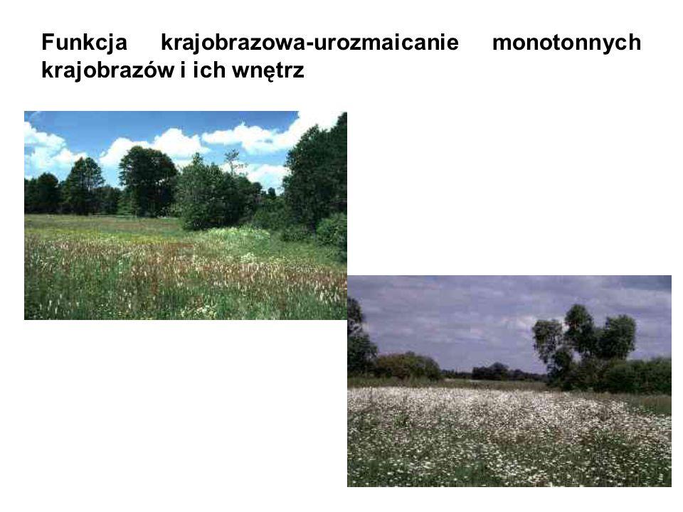 Funkcja krajobrazowa-urozmaicanie monotonnych krajobrazów i ich wnętrz
