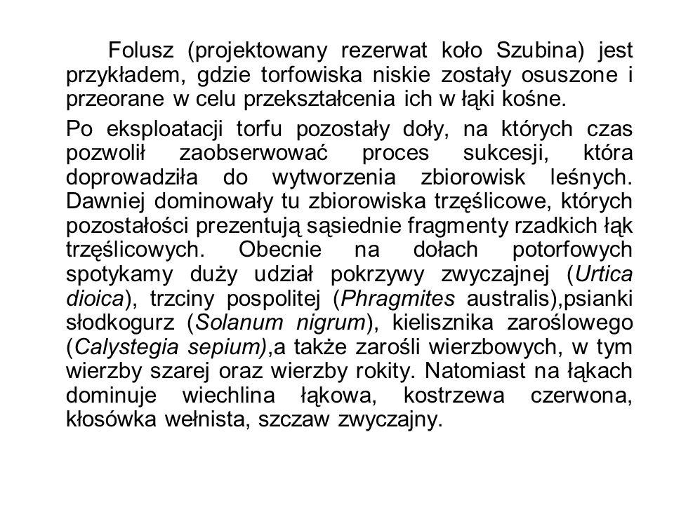 Folusz (projektowany rezerwat koło Szubina) jest przykładem, gdzie torfowiska niskie zostały osuszone i przeorane w celu przekształcenia ich w łąki ko