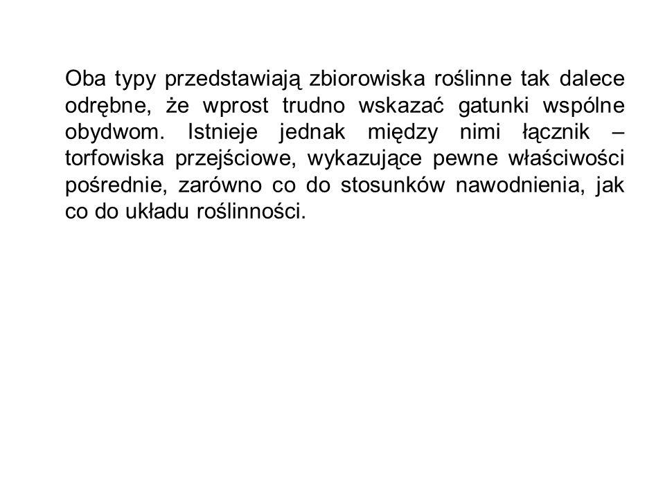 Epilobium palustre (Wierzbownica błotna) Hydrocotyle vulgaris (Wąkrota zwyczajna)