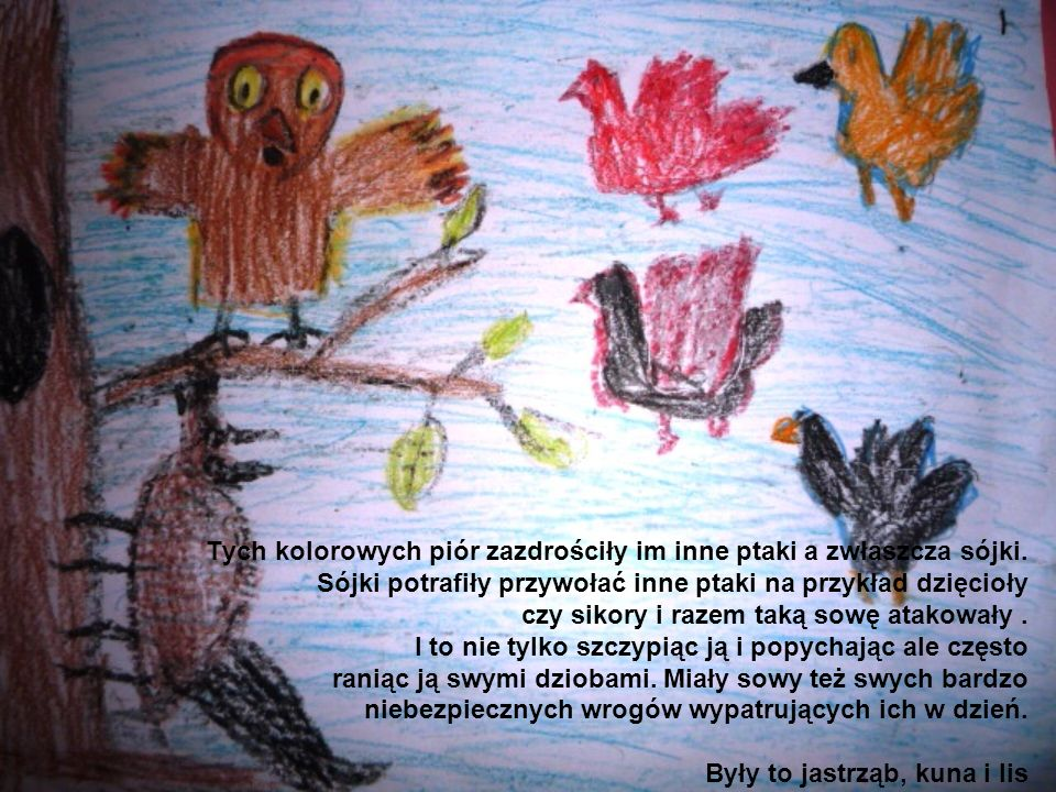 Tych kolorowych piór zazdrościły im inne ptaki a zwłaszcza sójki. Sójki potrafiły przywołać inne ptaki na przykład dzięcioły czy sikory i razem taką s