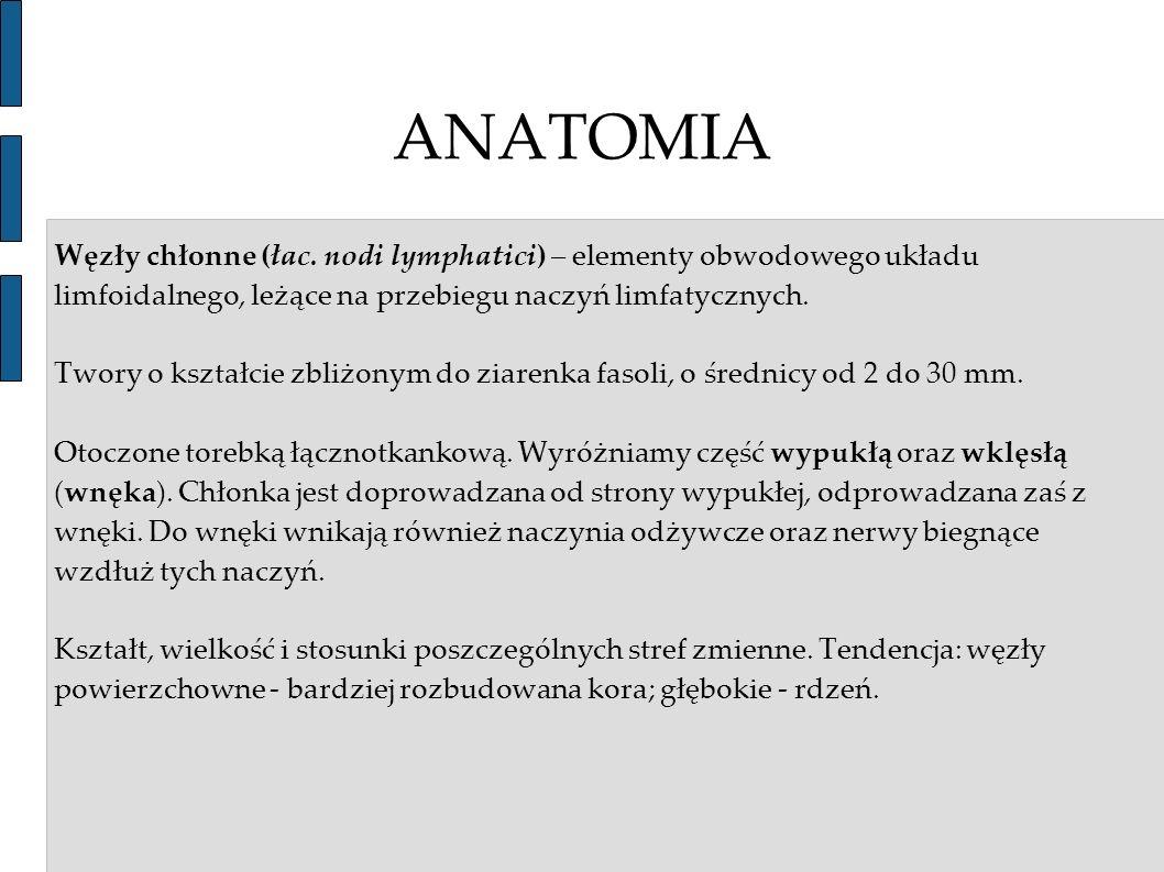 ANATOMIA Węzły chłonne (łac. nodi lymphatici) – elementy obwodowego układu limfoidalnego, leżące na przebiegu naczyń limfatycznych. Twory o kształcie