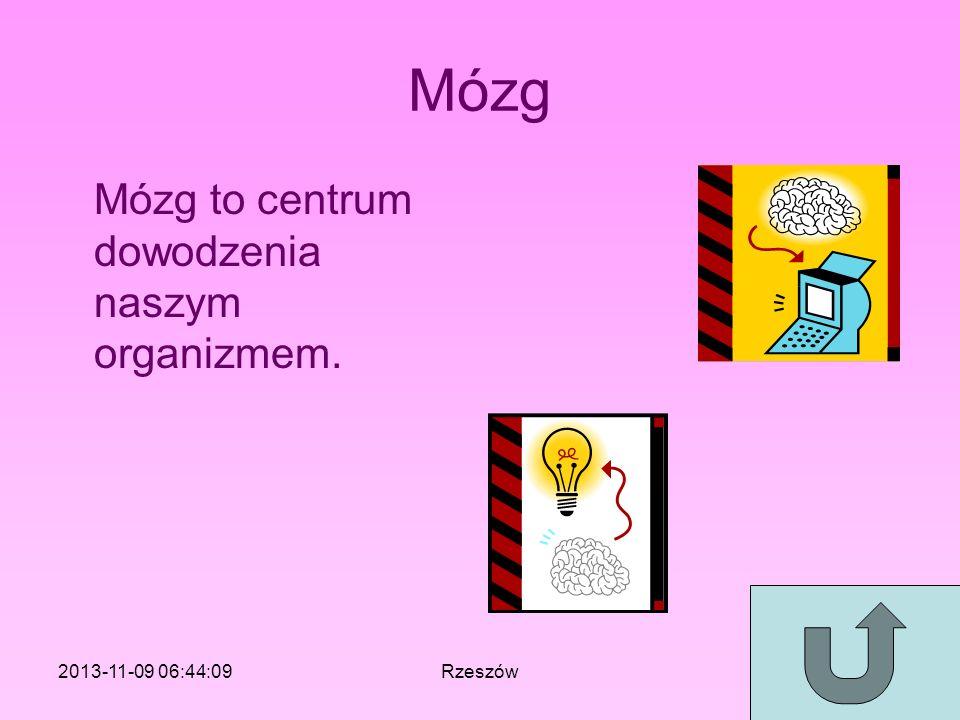 Mózg Mózg to centrum dowodzenia naszym organizmem. 2013-11-09 06:46:11Rzeszów