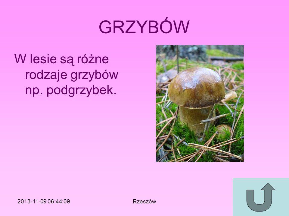 GRZYBÓW W lesie są różne rodzaje grzybów np. podgrzybek. 2013-11-09 06:46:11Rzeszów