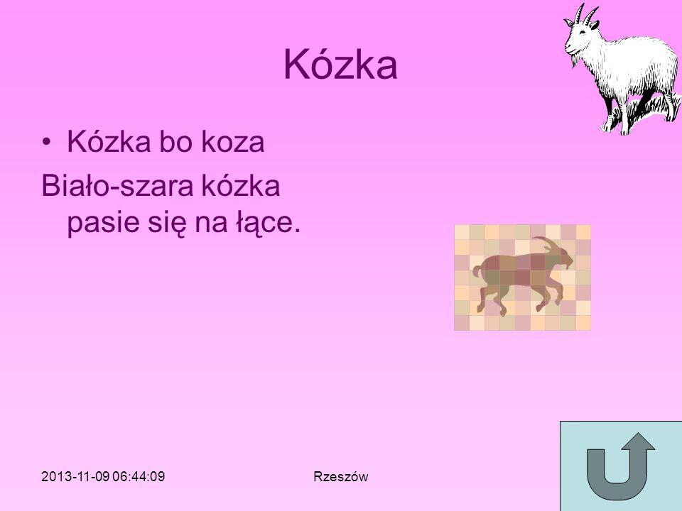 Kózka Kózka bo koza Biało-szara kózka pasie się na łące. 2013-11-09 06:46:11Rzeszów