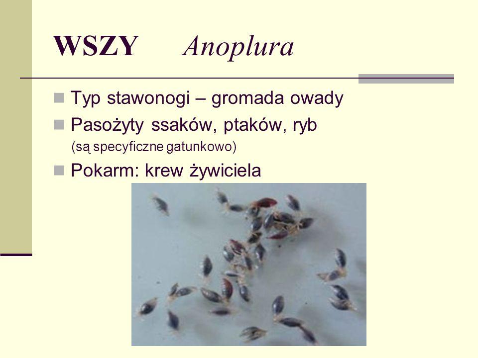 WSZY Anoplura Typ stawonogi – gromada owady Pasożyty ssaków, ptaków, ryb (są specyficzne gatunkowo) Pokarm: krew żywiciela