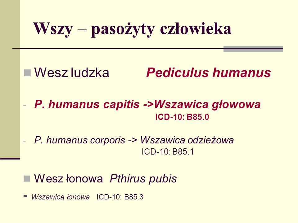 Wszy – pasożyty człowieka Wesz ludzka Pediculus humanus - P. humanus capitis ->Wszawica głowowa ICD-10: B85.0 - P. humanus corporis -> Wszawica odzież