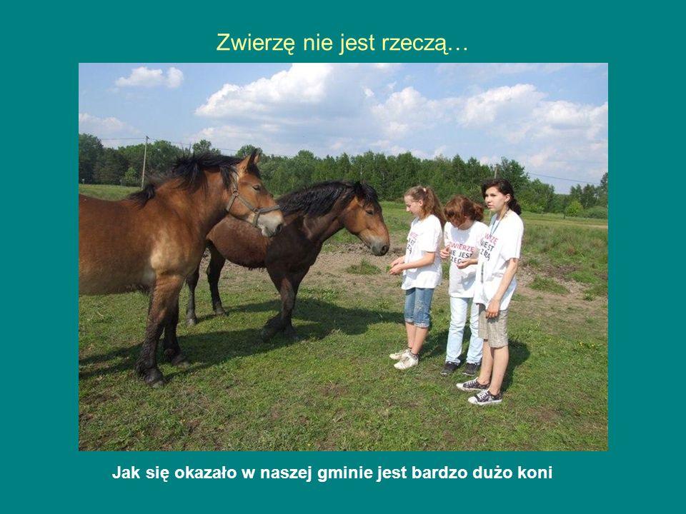 Jak się okazało w naszej gminie jest bardzo dużo koni