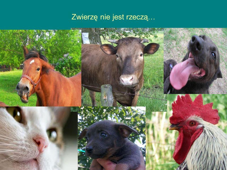 Zwierzę nie jest rzeczą…