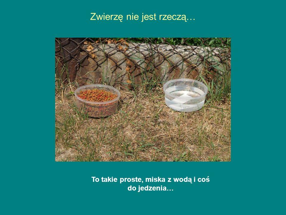 Zwierzę nie jest rzeczą… To takie proste, miska z wodą i coś do jedzenia…