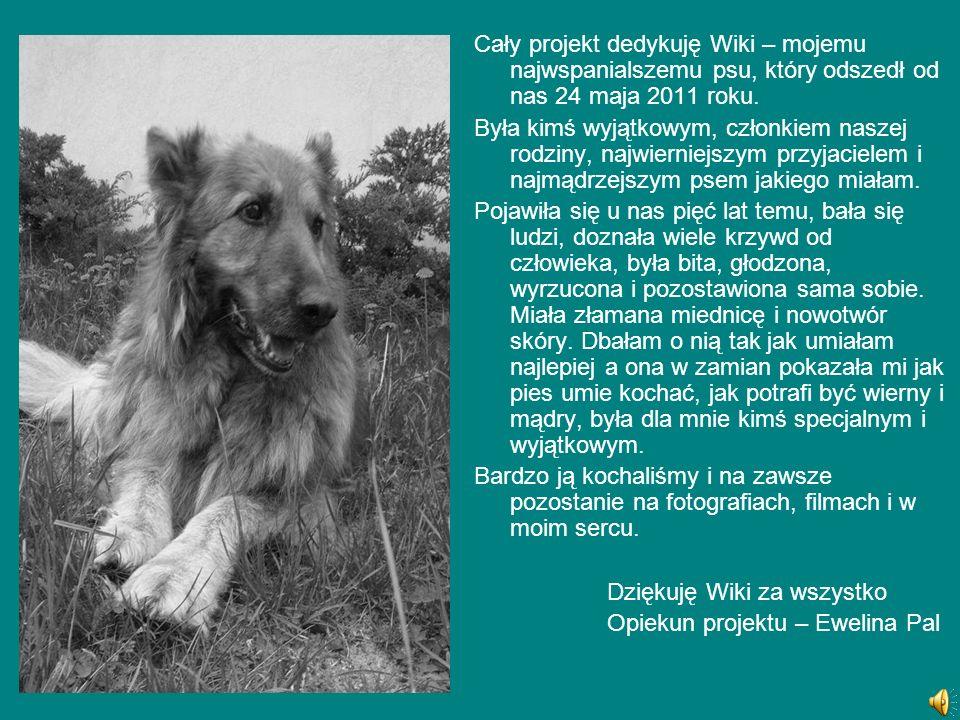 Cały projekt dedykuję Wiki – mojemu najwspanialszemu psu, który odszedł od nas 24 maja 2011 roku. Była kimś wyjątkowym, członkiem naszej rodziny, najw