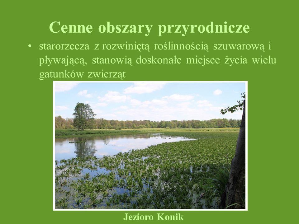 Cenne obszary przyrodnicze starorzecza z rozwiniętą roślinnością szuwarową i pływającą, stanowią doskonałe miejsce życia wielu gatunków zwierząt Jezio