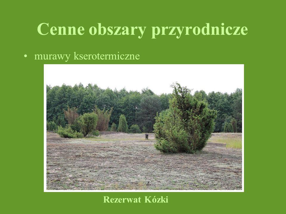 Cenne obszary przyrodnicze murawy kserotermiczne Rezerwat Kózki