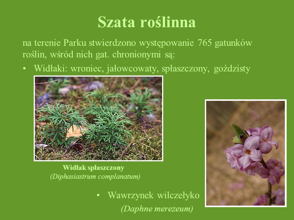 Szata roślinna na terenie Parku stwierdzono występowanie 765 gatunków roślin, wśród nich gat. chronionymi są: Widłaki: wroniec, jałowcowaty, spłaszczo