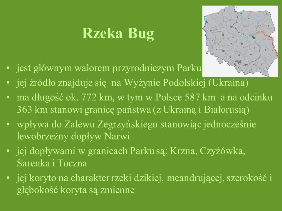 Rzeka Bug jest głównym walorem przyrodniczym Parku jej źródło znajduje się na Wyżynie Podolskiej (Ukraina) ma długość ok. 772 km, w tym w Polsce 587 k