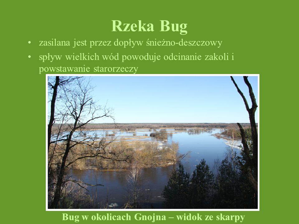 Rzeka Bug zasilana jest przez dopływ śnieżno-deszczowy spływ wielkich wód powoduje odcinanie zakoli i powstawanie starorzeczy Bug w okolicach Gnojna –