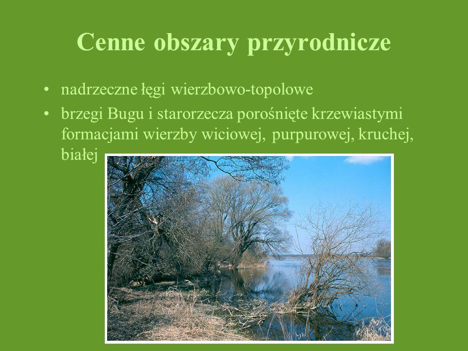 Cenne obszary przyrodnicze nadrzeczne łęgi wierzbowo-topolowe brzegi Bugu i starorzecza porośnięte krzewiastymi formacjami wierzby wiciowej, purpurowe