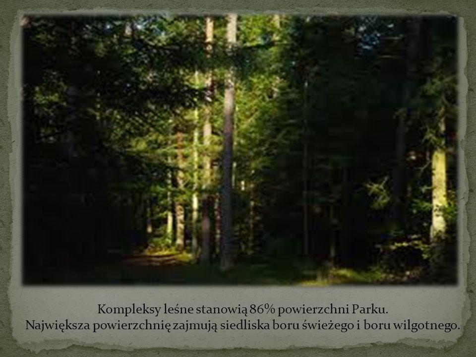 Kompleksy leśne stanowią 86% powierzchni Parku. Największa powierzchnię zajmują siedliska boru świeżego i boru wilgotnego.