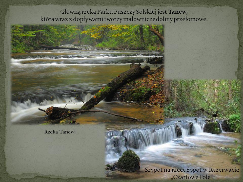 Główną rzeką Parku Puszczy Solskiej jest Tanew, która wraz z dopływami tworzy malownicze doliny przełomowe. Rzeka Tanew Szypot na rzece Sopot w Rezerw