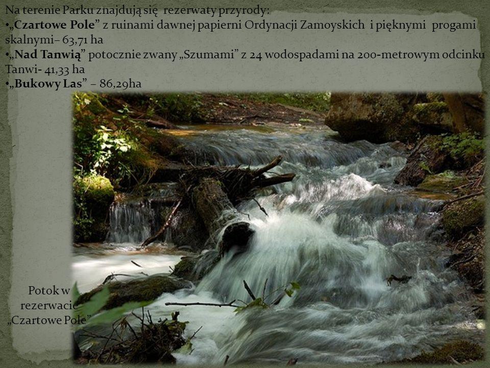 Na terenie Parku znajdują się rezerwaty przyrody: Czartowe Pole z ruinami dawnej papierni Ordynacji Zamoyskich i pięknymi progami skalnymi– 63,71 ha N