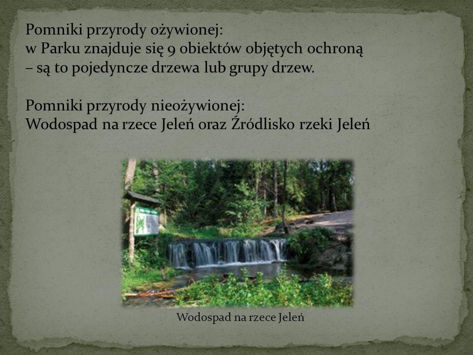 Pomniki przyrody ożywionej: w Parku znajduje się 9 obiektów objętych ochroną – są to pojedyncze drzewa lub grupy drzew. Pomniki przyrody nieożywionej: