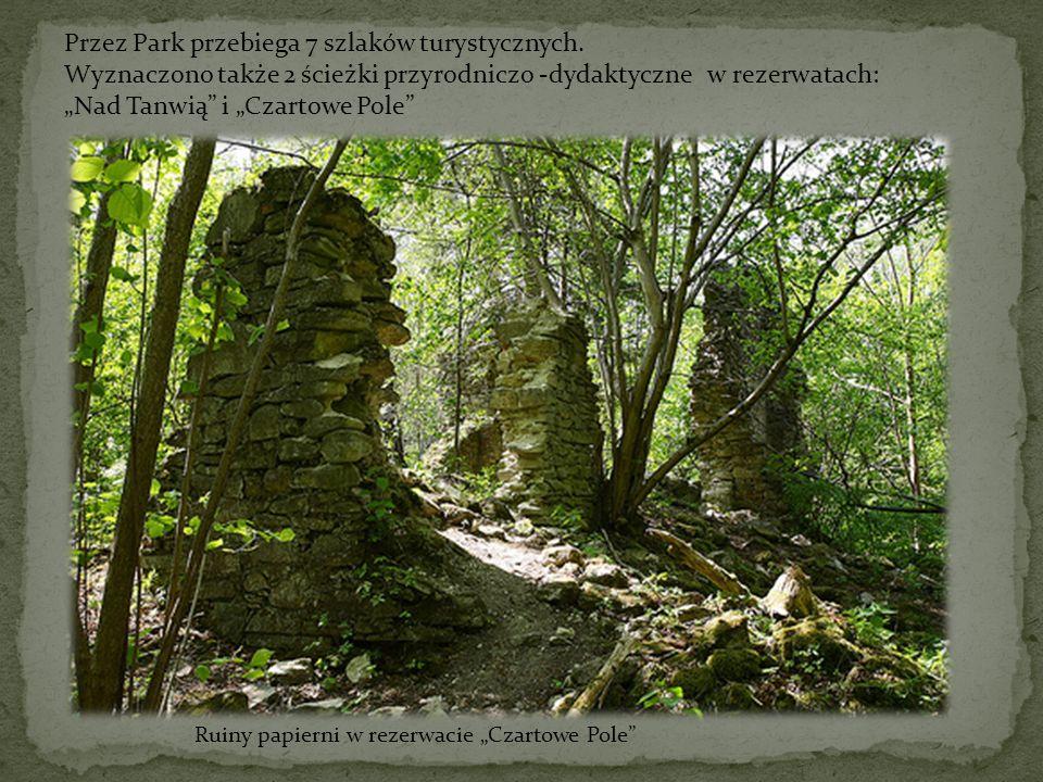 Przez Park przebiega 7 szlaków turystycznych. Wyznaczono także 2 ścieżki przyrodniczo -dydaktyczne w rezerwatach: Nad Tanwią i Czartowe Pole Ruiny pap