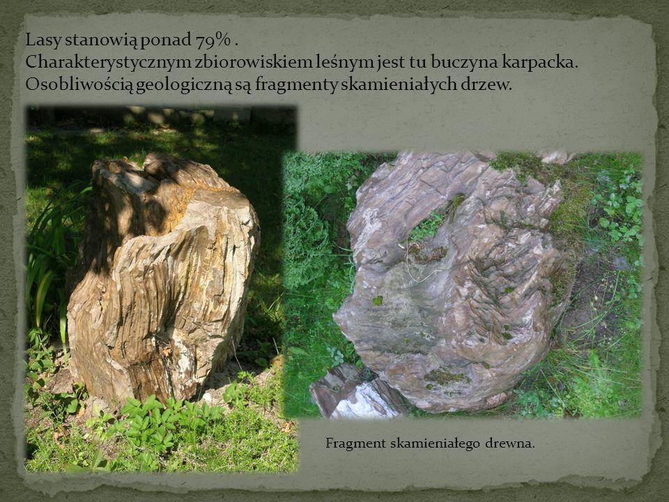 Lasy stanowią ponad 79%. Charakterystycznym zbiorowiskiem leśnym jest tu buczyna karpacka. Osobliwością geologiczną są fragmenty skamieniałych drzew.