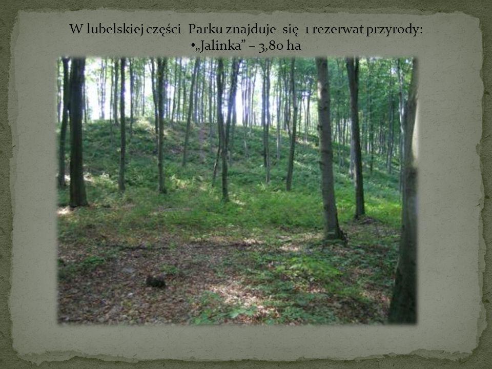W lubelskiej części Parku znajduje się 1 rezerwat przyrody: Jalinka – 3,80 ha