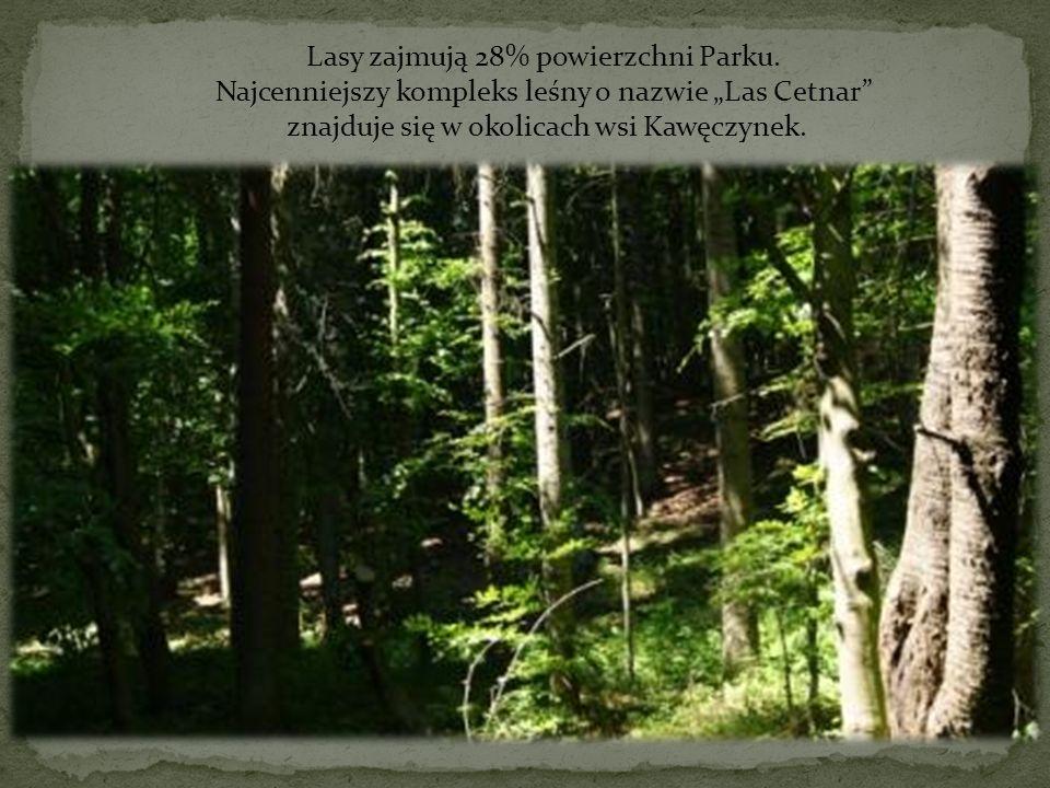 Lasy zajmują 28% powierzchni Parku. Najcenniejszy kompleks leśny o nazwie Las Cetnar znajduje się w okolicach wsi Kawęczynek. Las Cetnar
