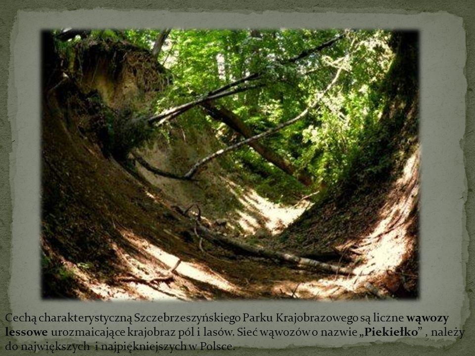 Cechą charakterystyczną Szczebrzeszyńskiego Parku Krajobrazowego są liczne wąwozy lessowe urozmaicające krajobraz pól i lasów. Sieć wąwozów o nazwie P