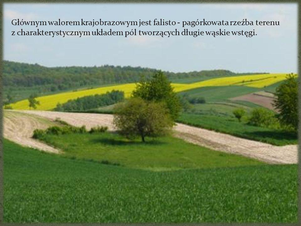 Głównym walorem krajobrazowym jest falisto - pagórkowata rzeźba terenu z charakterystycznym układem pól tworzących długie wąskie wstęgi.