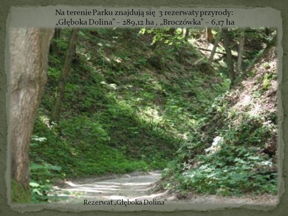Rezerwat Głęboka Dolina Na terenie Parku znajdują się 3 rezerwaty przyrody: Głęboka Dolina – 289,12 ha, Broczówka – 6,17 ha
