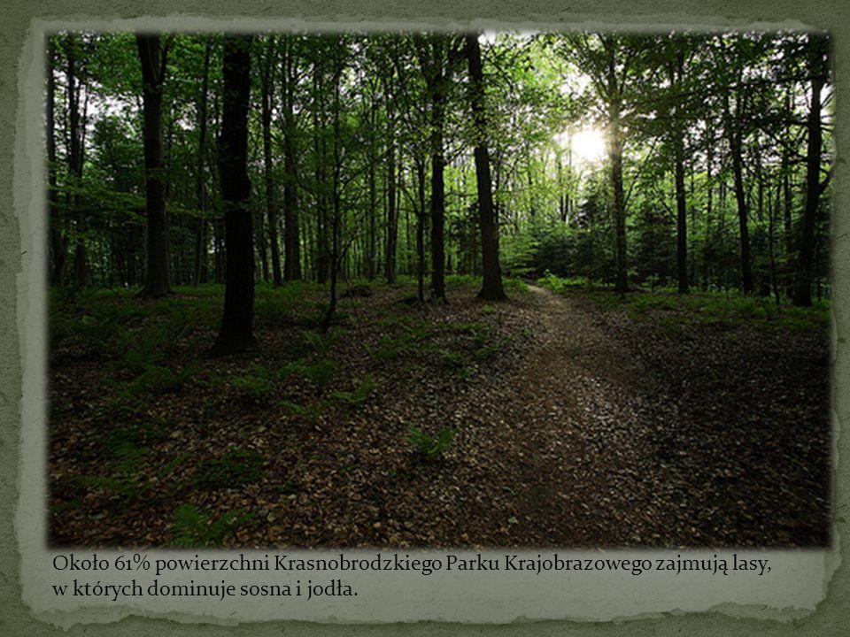 Około 61% powierzchni Krasnobrodzkiego Parku Krajobrazowego zajmują lasy, w których dominuje sosna i jodła.