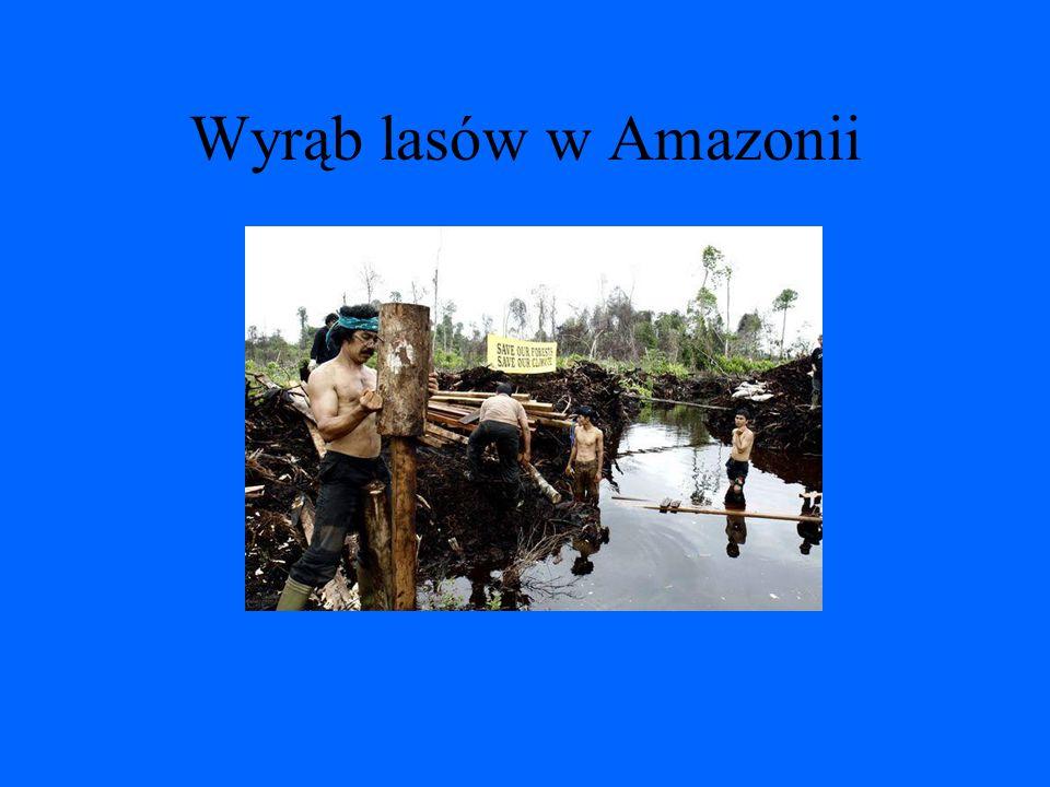 Wyrąb lasów w Amazonii