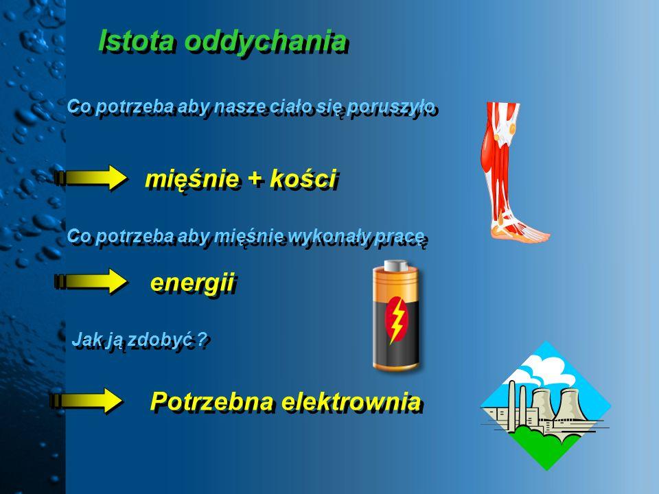 Istota oddychania Co potrzeba aby nasze ciało się poruszyło Co potrzeba aby nasze ciało się poruszyło mięśnie + kości Co potrzeba aby mięśnie wykonały