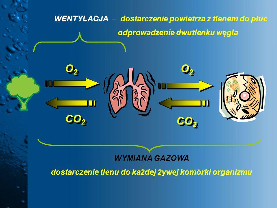 O2O2 O2O2 CO 2 WENTYLACJA – dostarczenie powietrza z tlenem do płuc odprowadzenie dwutlenku węgla O2O2 O2O2 CO 2 WYMIANA GAZOWA dostarczenie tlenu do
